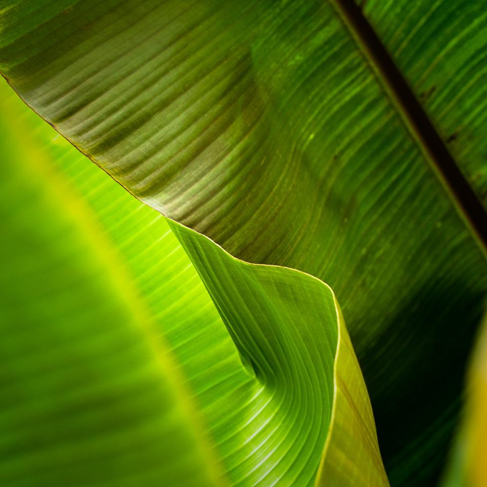 Banana Abstract