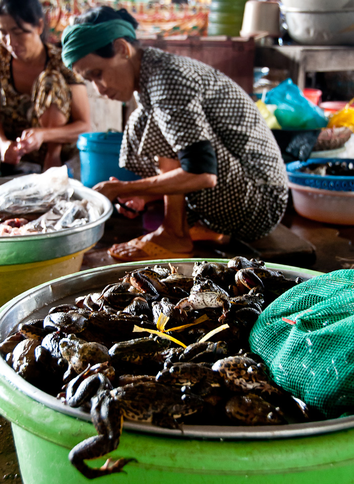 Live Frogs - Mekong River, Vietnam