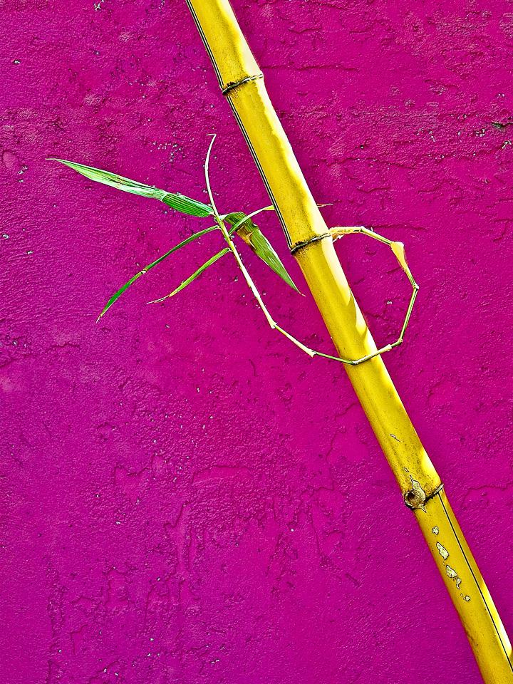 Bamboo on Fuschia