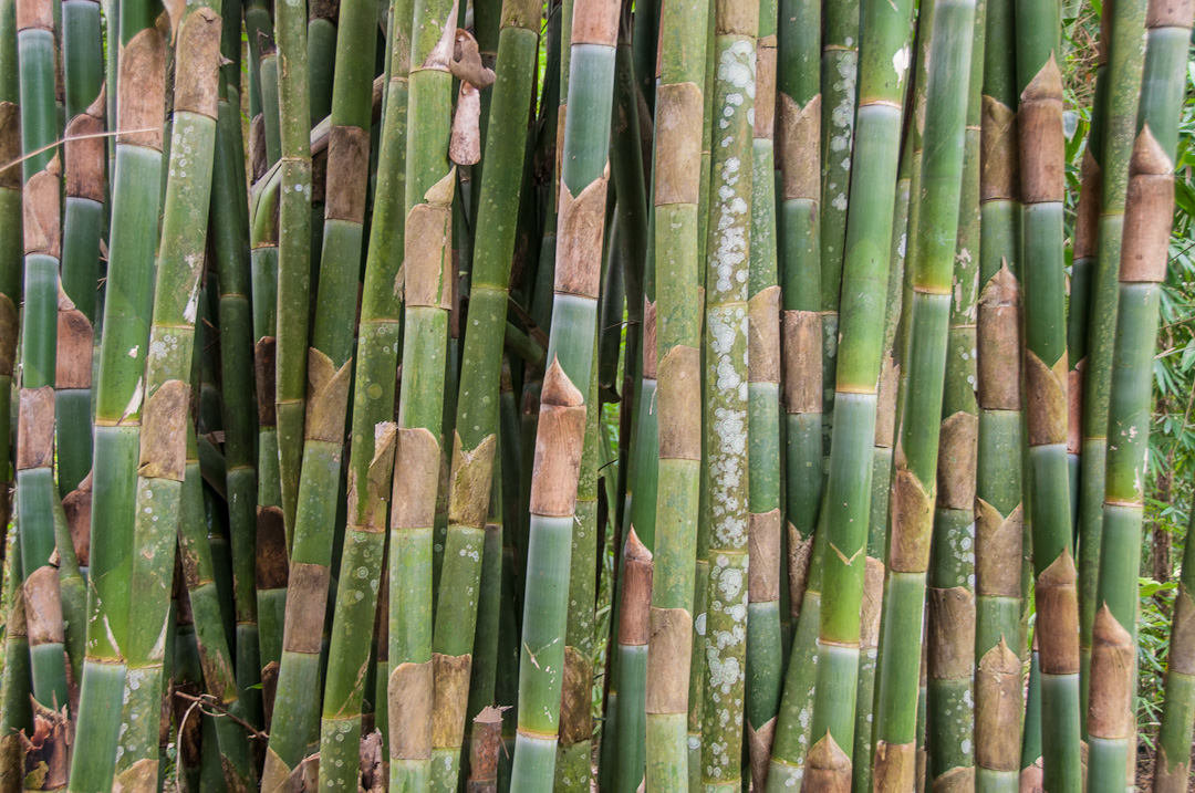 Bali Bamboo
