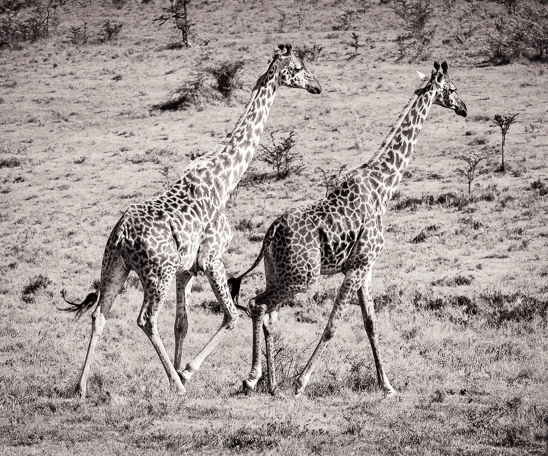 Ngorongoro Wildlife