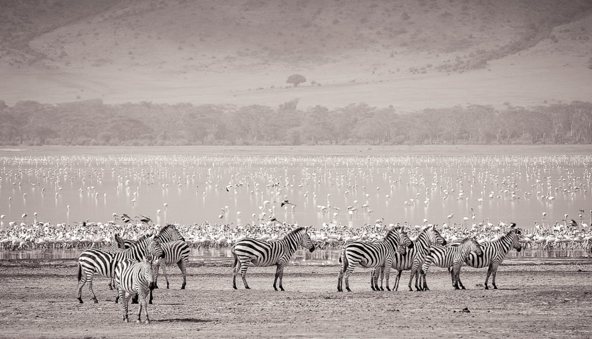 Travel Theme: Animals – The Wildlife of Ngorongoro Crater, Tanzania