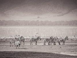 Travel Theme: Animals – The Wildlife of Ngorongoro Crater, Tanzania