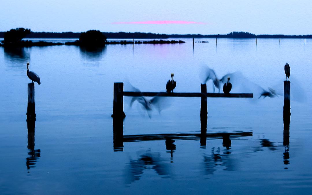 Pelican Ghosts