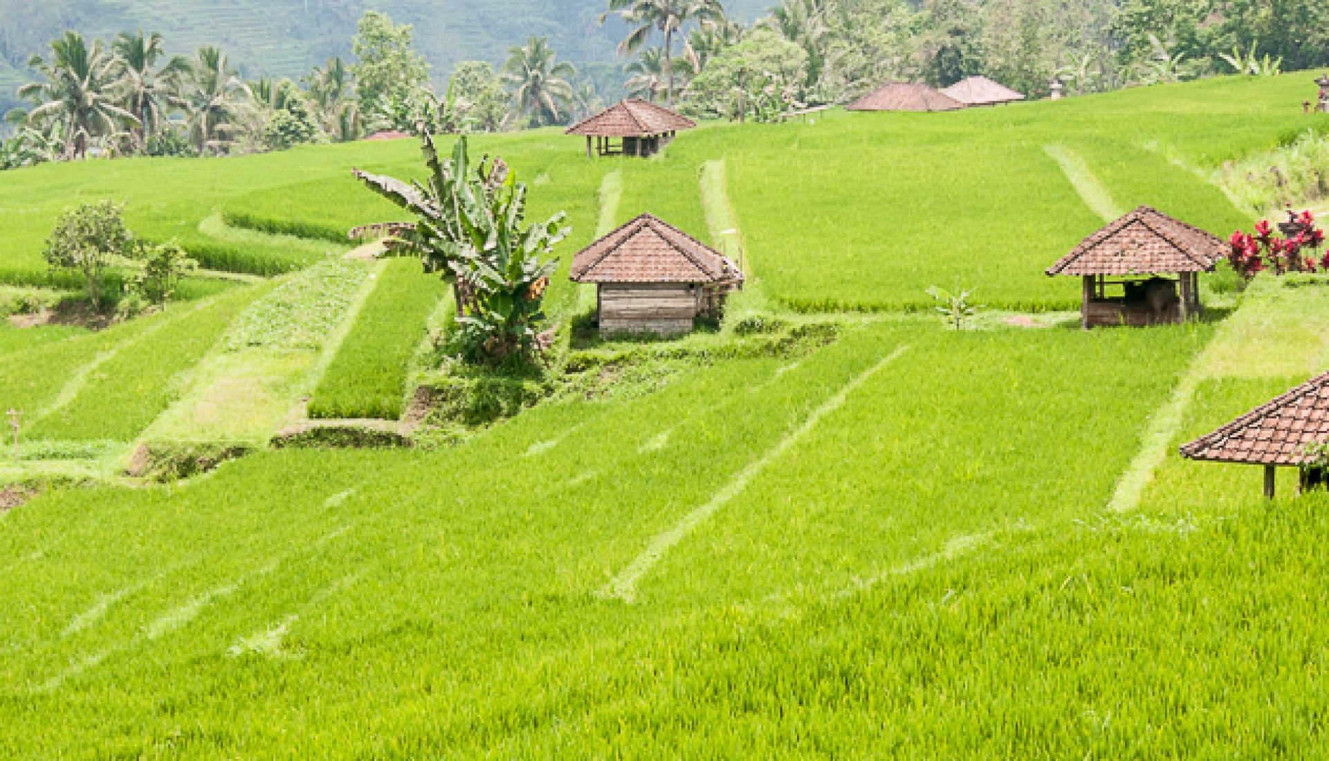 Peaceful Bali Rice Fields
