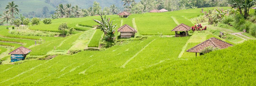 Peaceful Bali Rice Fields