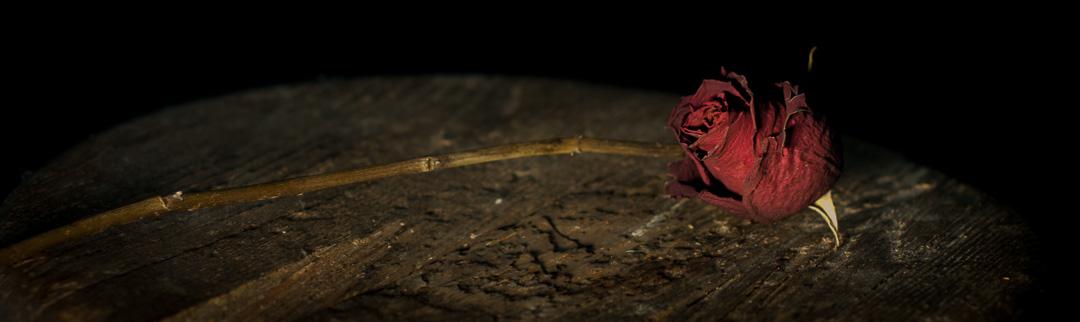 Still Life – Roses
