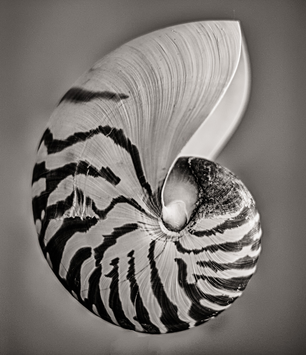 The Beauty of Curves – the Chambered Nautilus