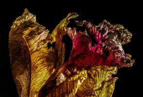 Macro Monday – Withered Beauty