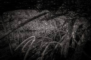 Into the Forest Darkly