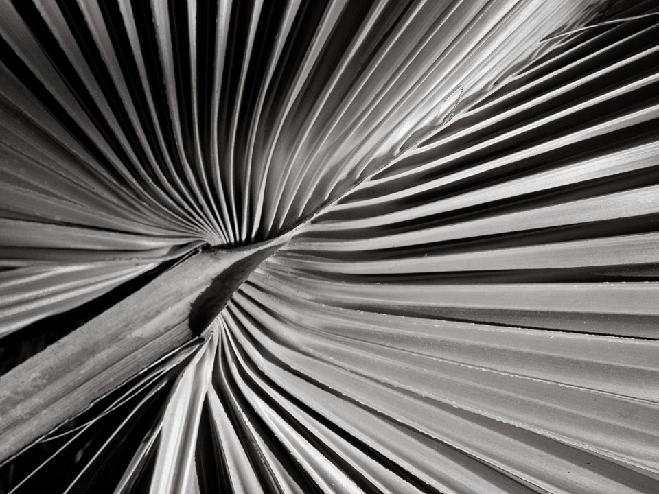 Lines and Patterns