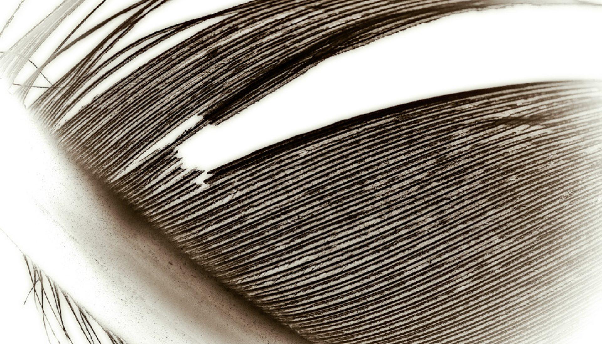 Macro Monday – Feather Line Pattern