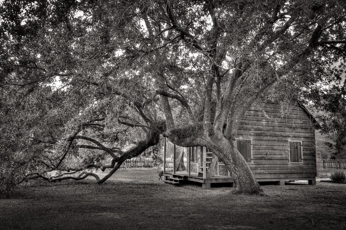 A Mighty Oak Tree, a Tiny Cabin