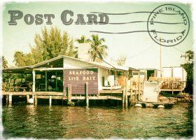 Vintage Pine Island