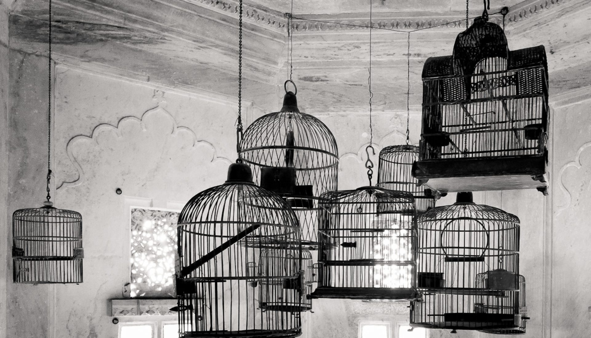 Still Life with Bird Cages