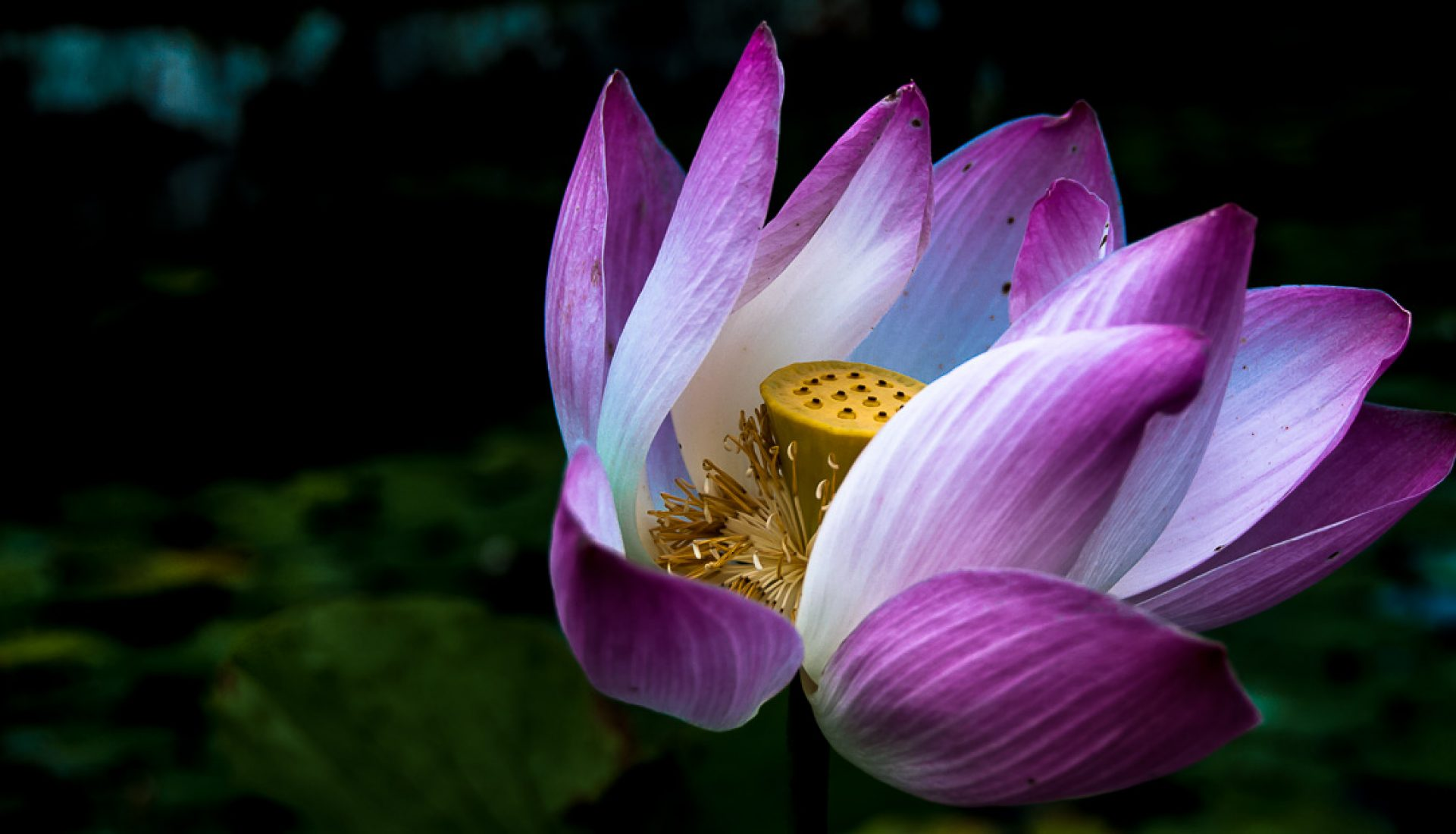 A Single Bloom – a Single Image