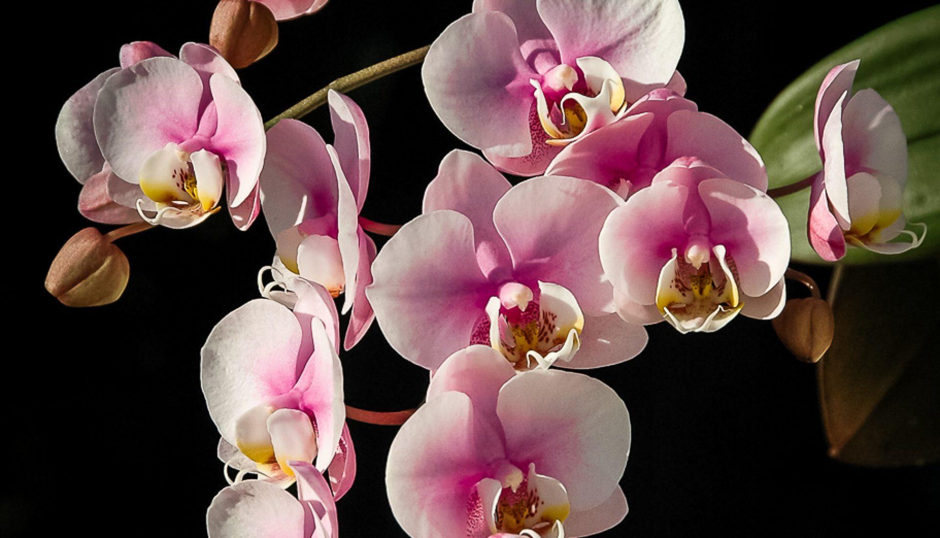 A Single Bloom – a Single Image (2)