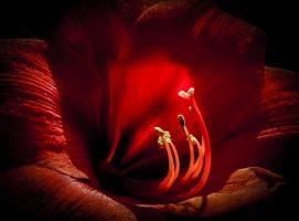 A Single Bloom – a Single Image (3)