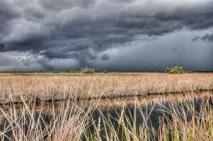 Summer Thunder Over Florida's Everglades