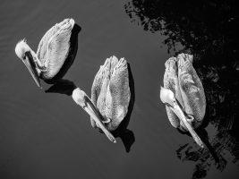 Three Part Harmony