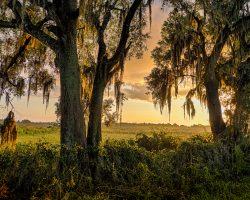Southern Sunrise