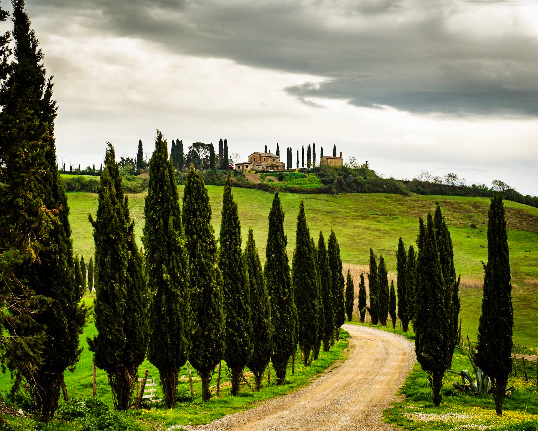 Tuscany's ubiquitous cypress trees
