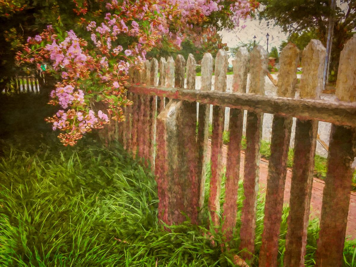 Impressions of a Garden