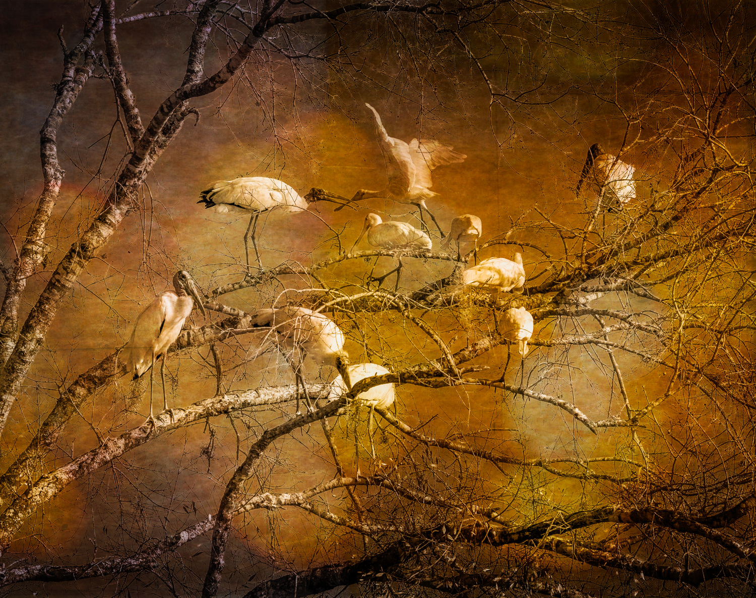Birds of Autum