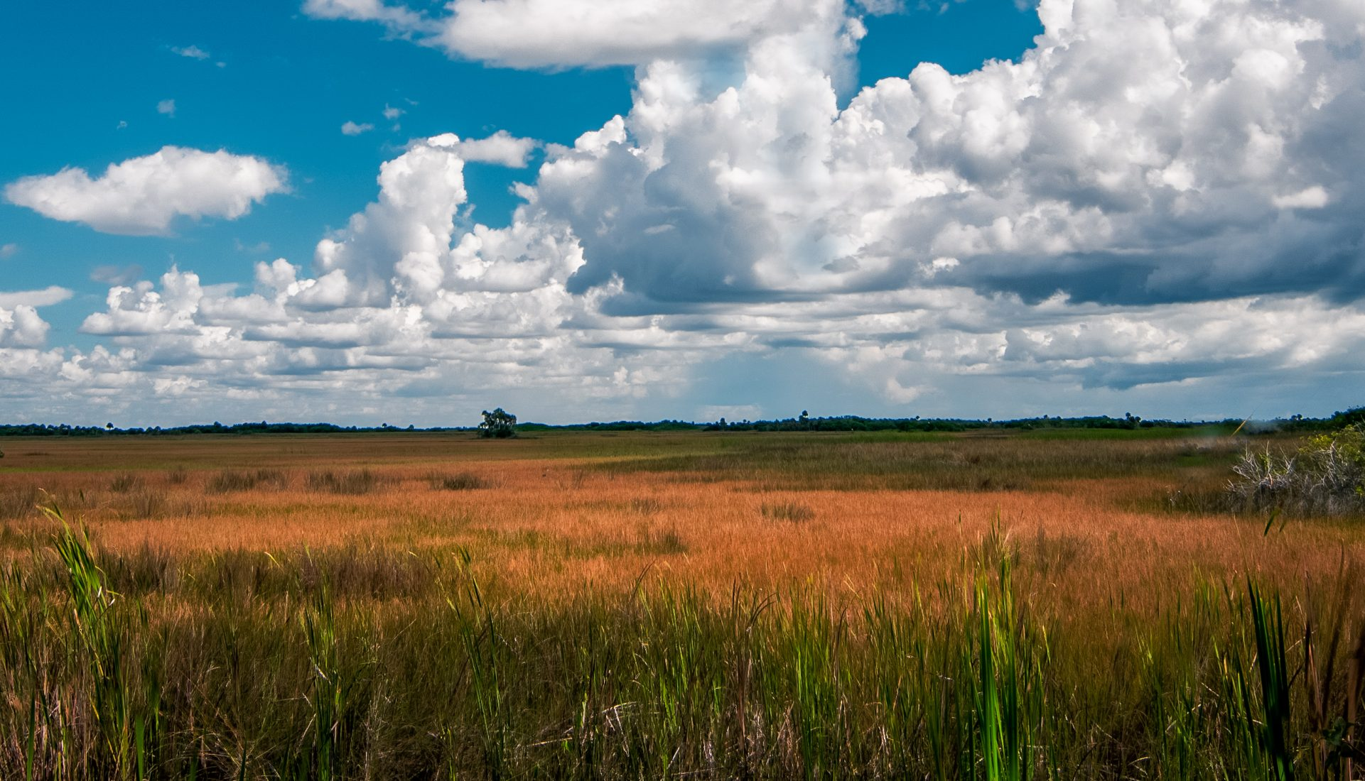 The Everglades, a River of Grass