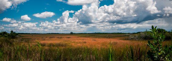 The Everglades, a River of Grass