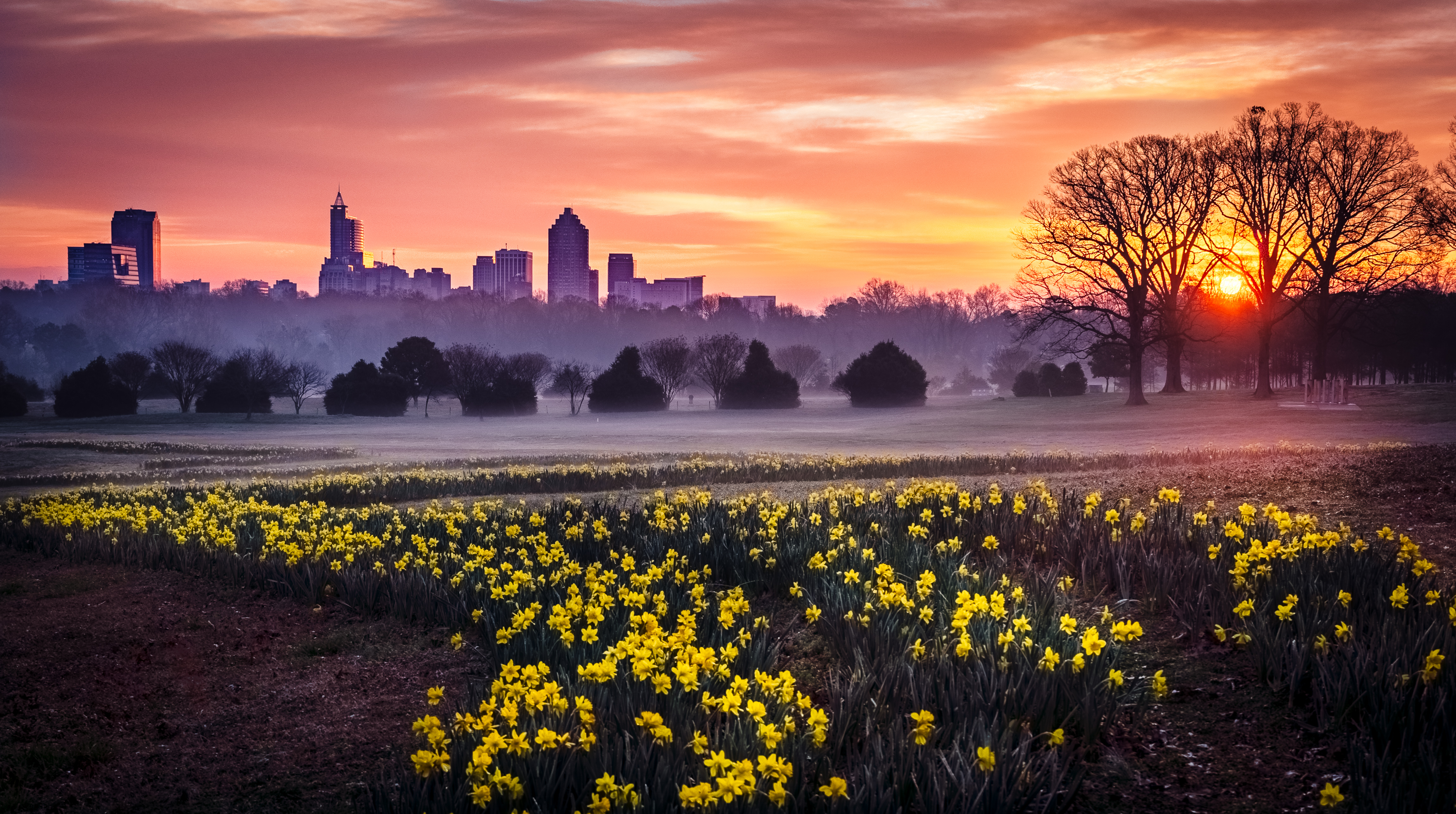 Sunrise over Raleigh, NC seen from Jonquil field at Dix Park