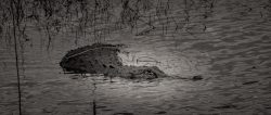 Myakka River State Park | another COVID-19 Victim