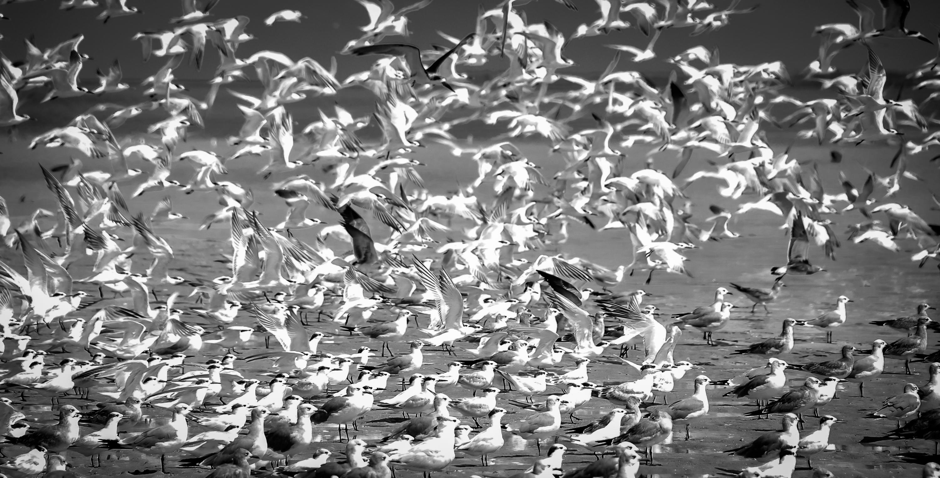 Seabirds Take Flight