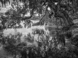 Leaning Oak – Monochrome Monday