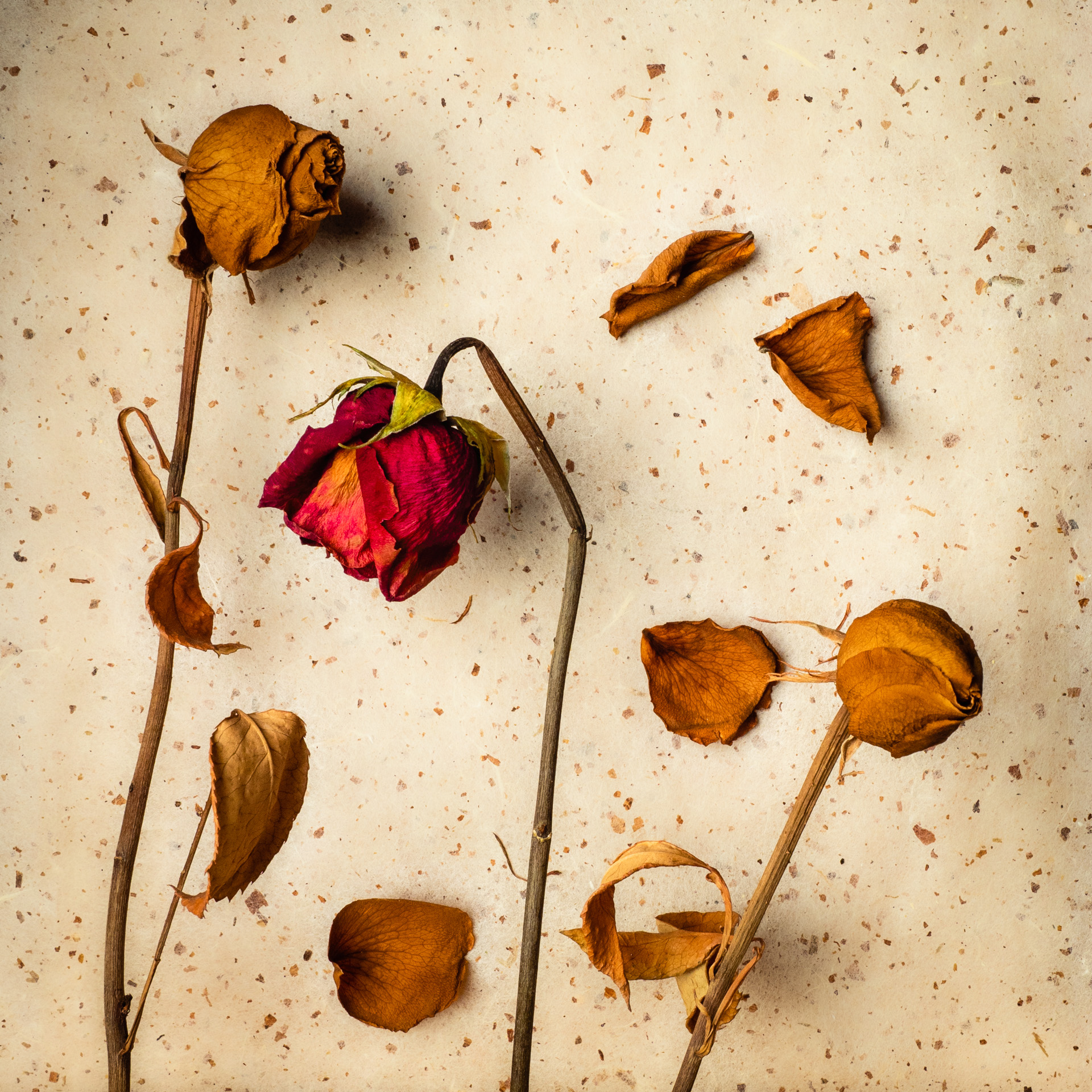 Rose Buds, Withered Beauties, dried rosebuds on a rice paper background