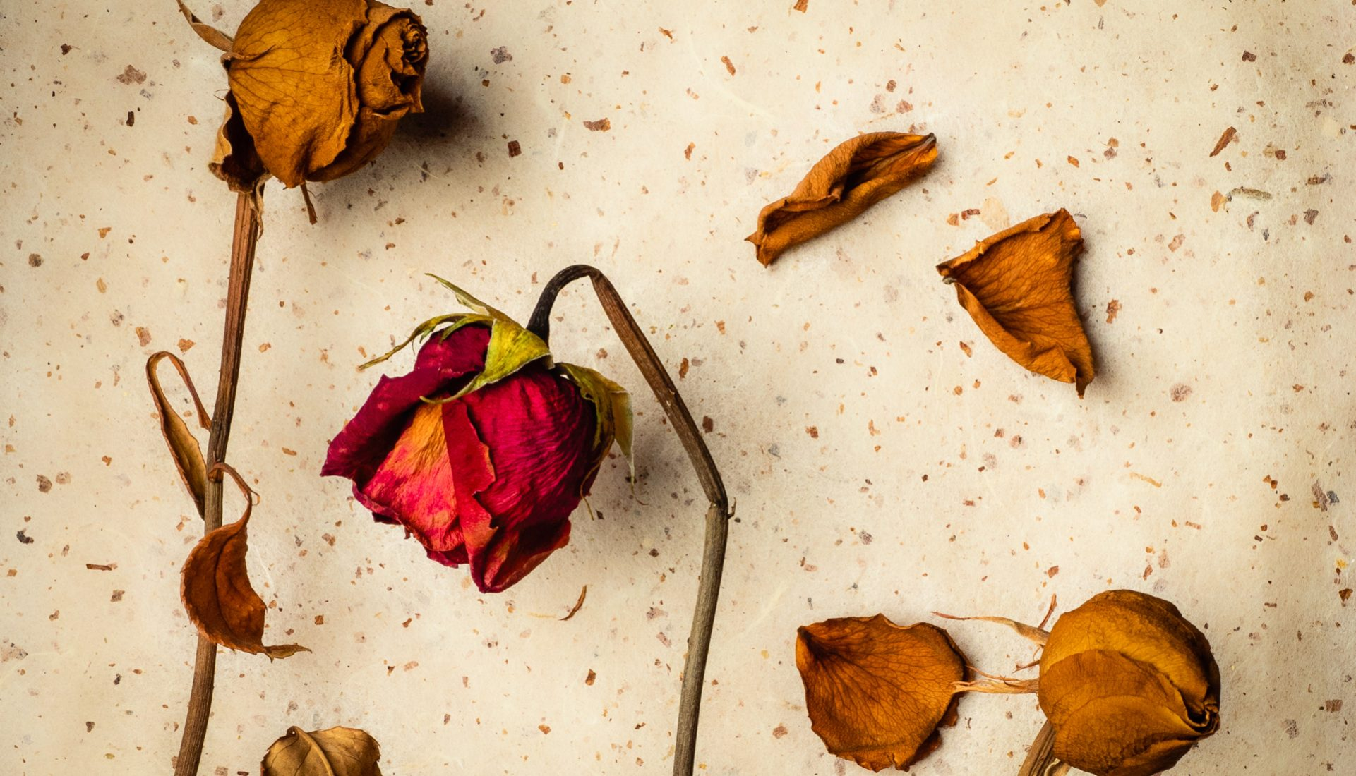 Rose Buds | Everlasting Beauty