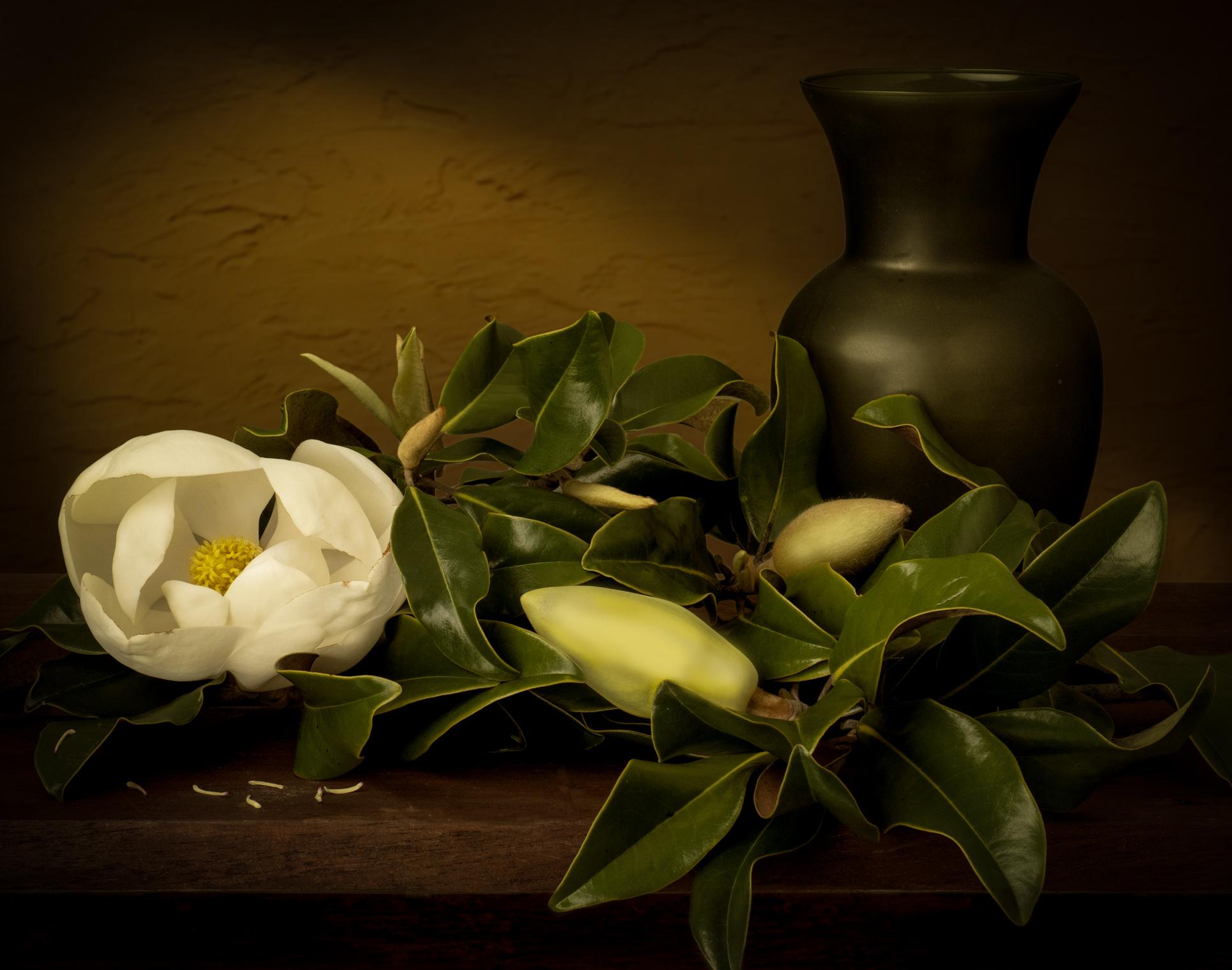 Magnolia Bloom-