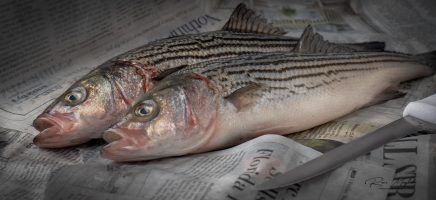 Something Fishy – a Hidden Message?