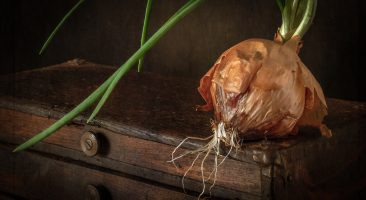 Still Life with Wooden Chest and Onion